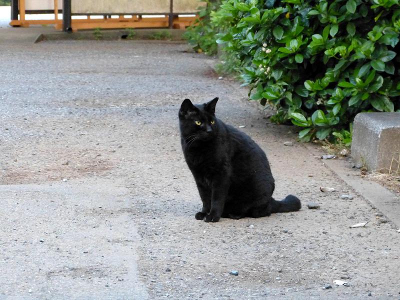 縁石と黒猫2