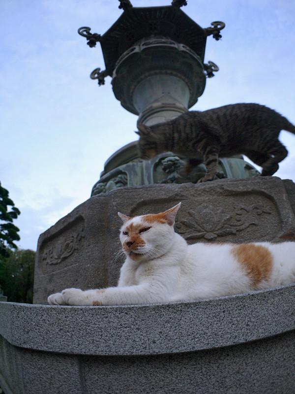 銅燈籠と白茶猫とキジトラ猫2