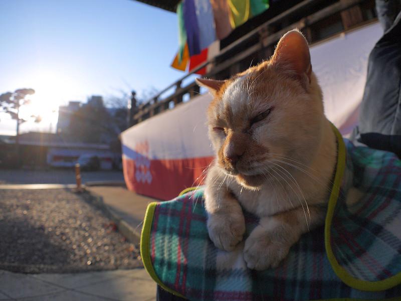 夕日と茶白猫2