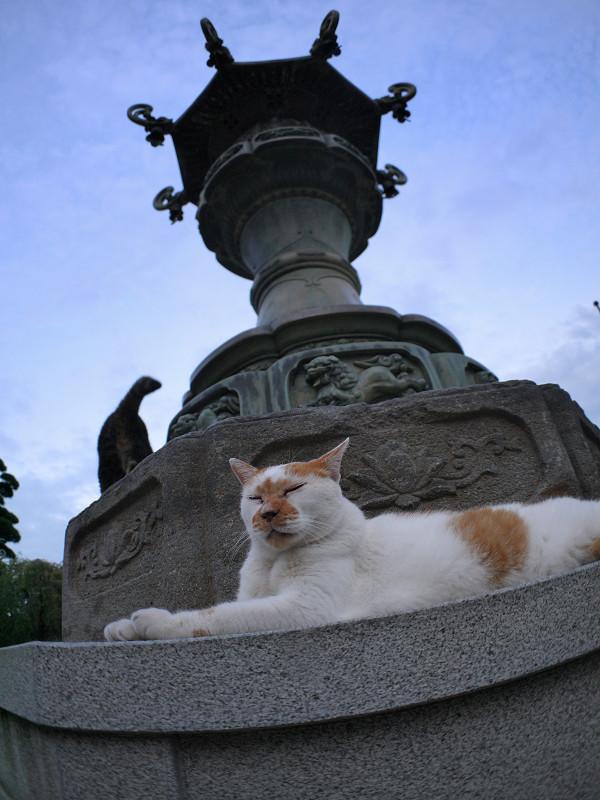 銅燈籠と白茶猫とキジトラ猫4