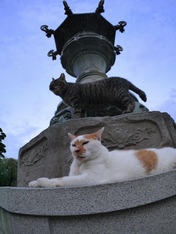 銅燈籠と白茶猫とキジトラ猫3