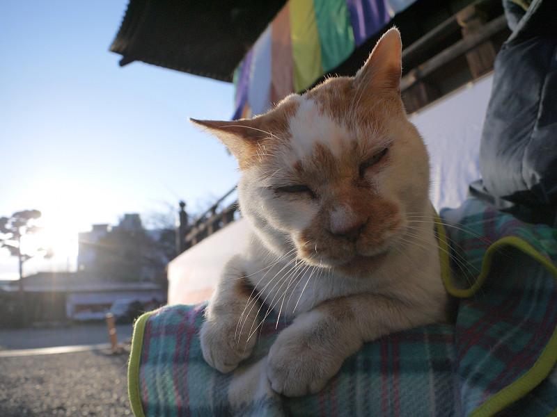 夕日と茶白猫3