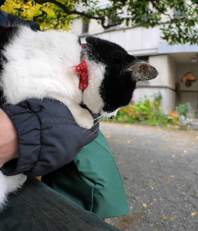 腕にしがみついてる白黒猫1
