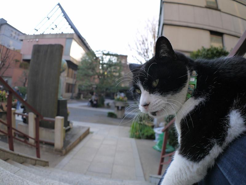 斜め後ろを見る黒白猫1