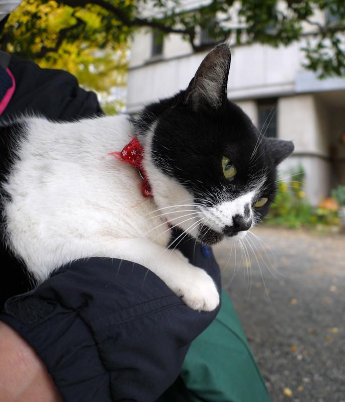 腕にしがみついてる白黒猫2