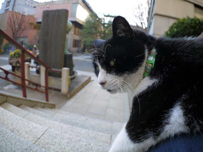 斜め後ろを見る黒白猫2