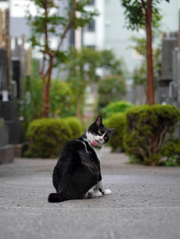 墓苑入口の黒白猫2