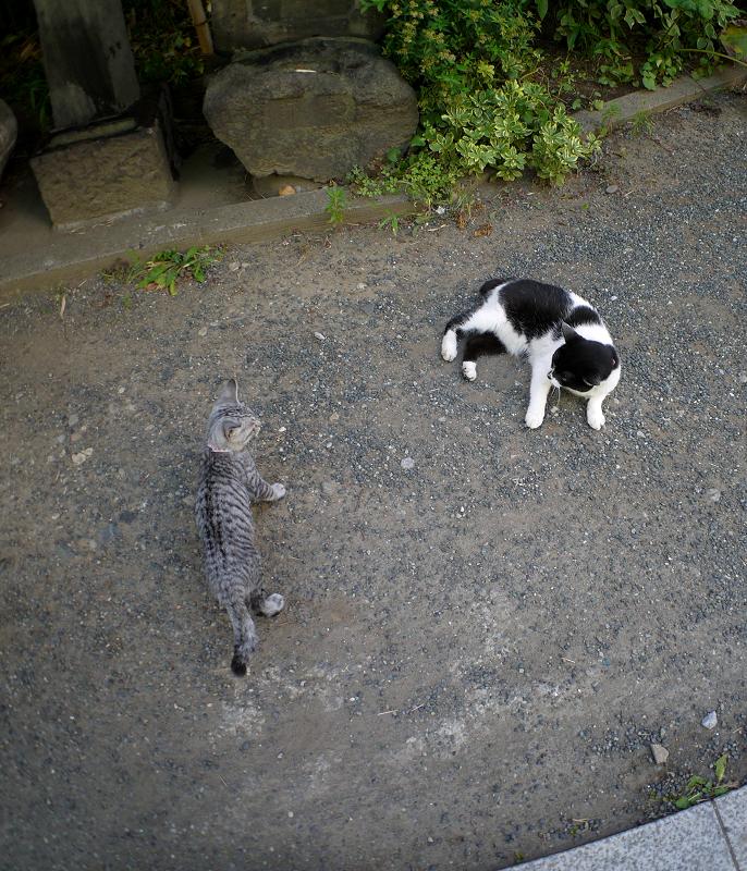 岩のゆっくり移動するサバトラ仔猫3