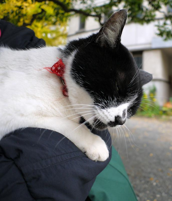 腕にしがみついてる白黒猫3