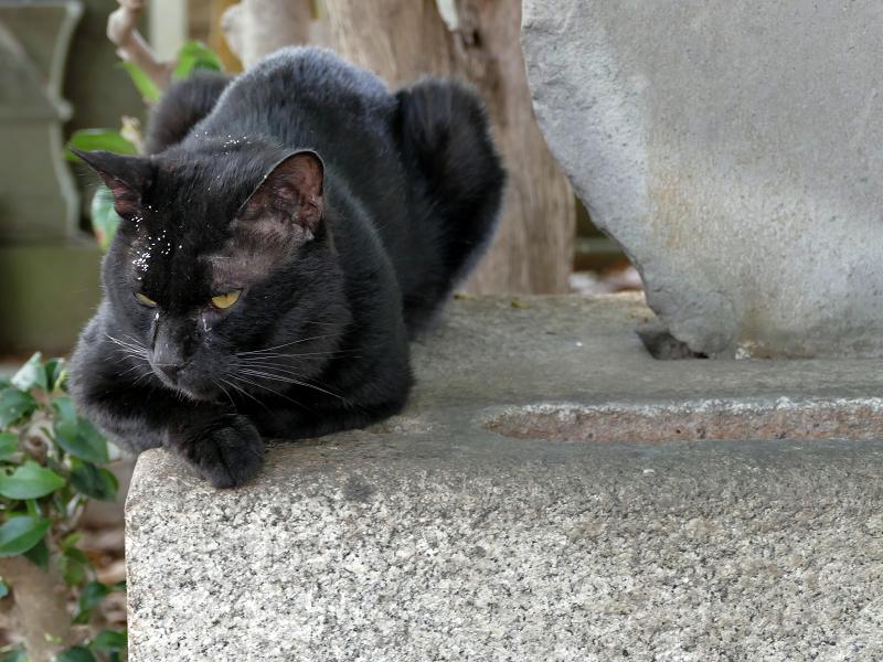 墓石と黒猫1