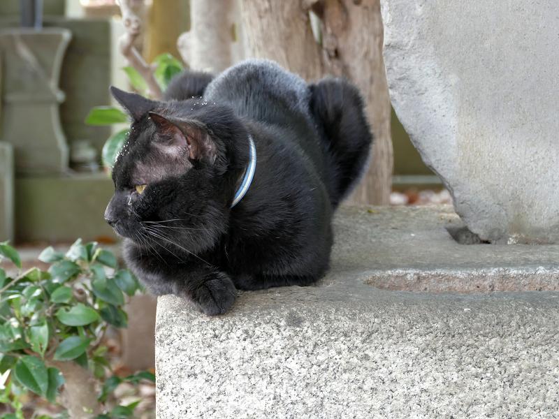 墓石と黒猫2