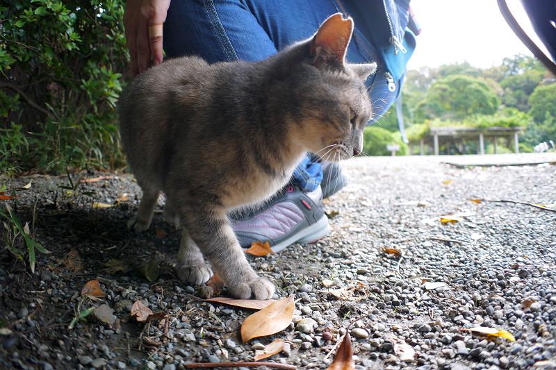 草むらとグレー猫3