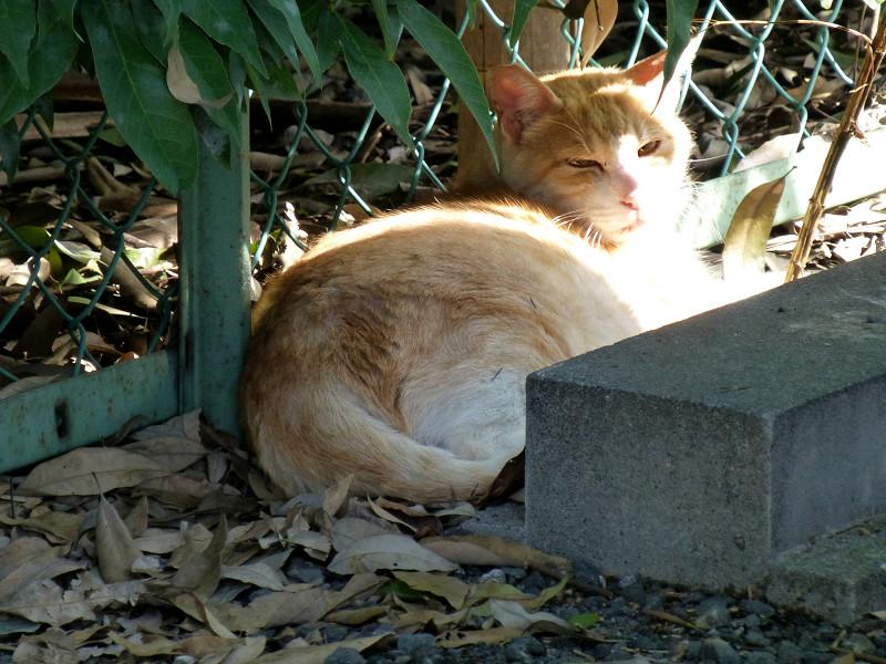 駐車場の隅と茶白猫1