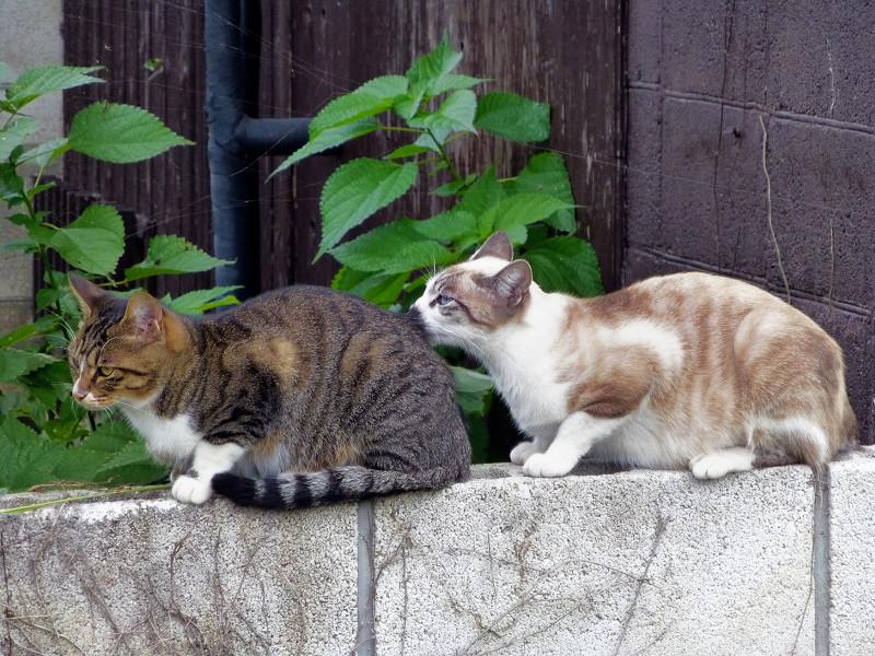 背中を嗅ぐ母猫1