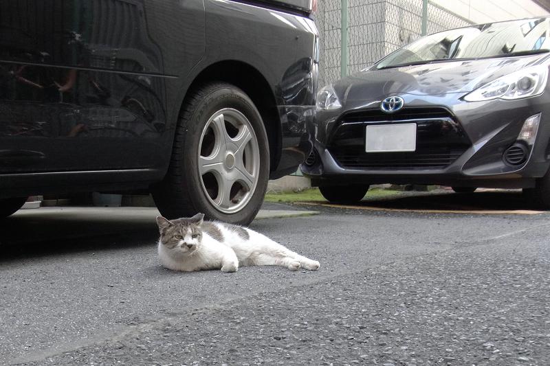 都会の路地の猫1