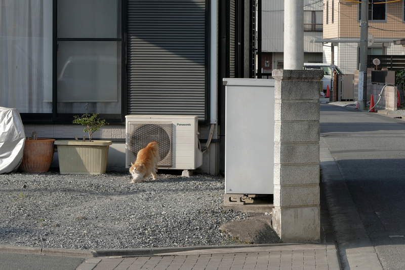 室外機から降りた毛長の茶白猫2