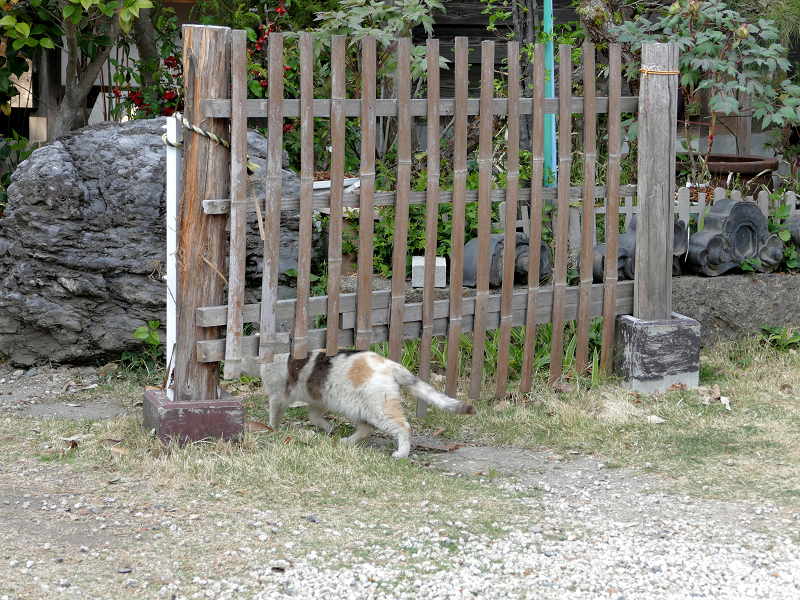 柵を潜る薄三毛猫2