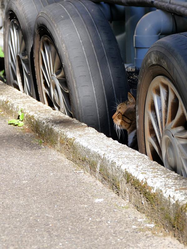 タイヤとキジトラ猫2