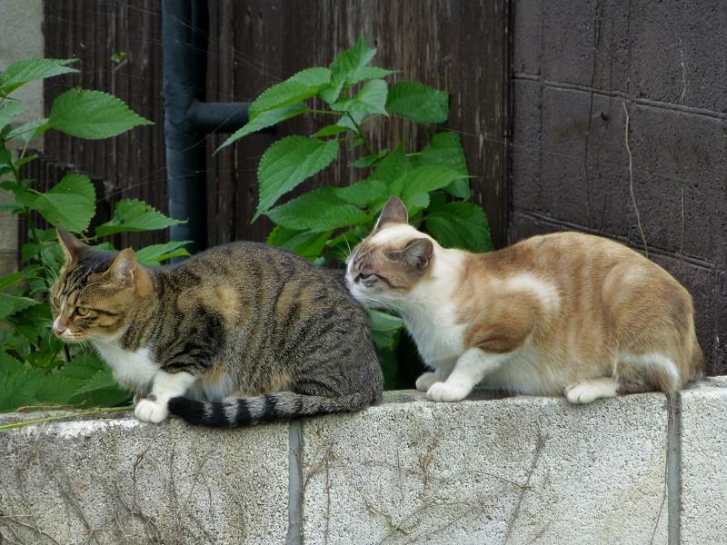 背中を嗅ぐ母猫2