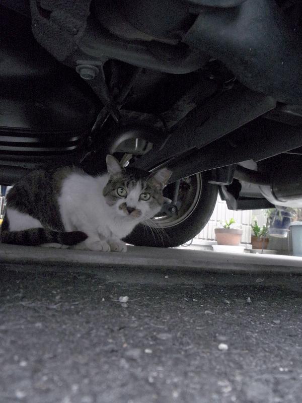 都会の路地の猫2