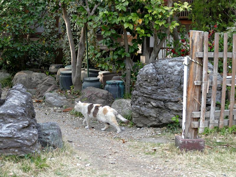 柵を潜る薄三毛猫3