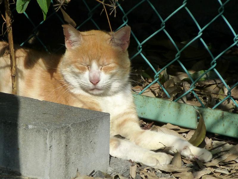 駐車場の隅と茶白猫3