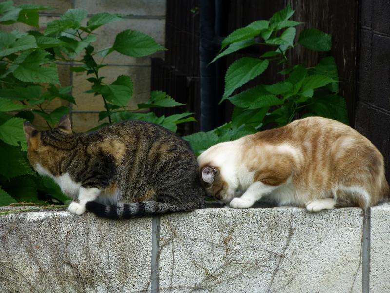 背中を嗅ぐ母猫3
