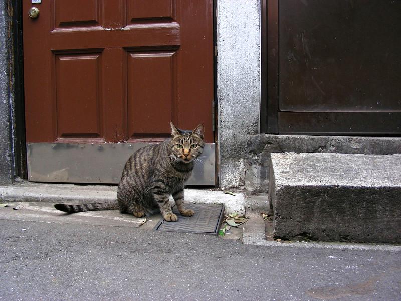ドア前のキジトラ猫1