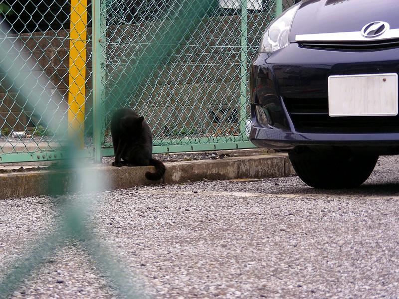 駐車場の片隅の黒猫1