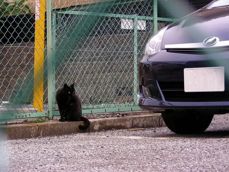 駐車場の片隅の黒猫2