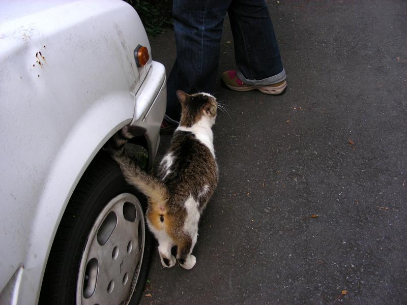 裏路地の猫たち3