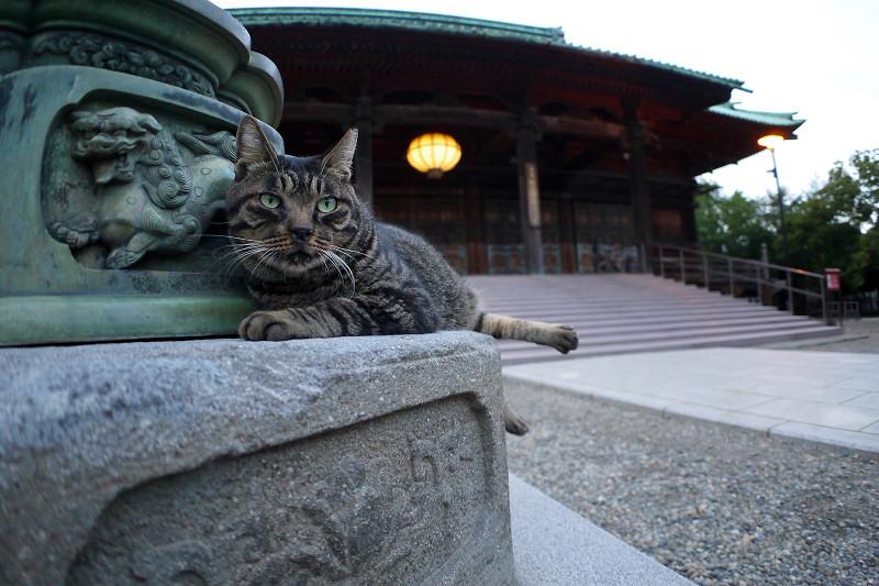 銅燈籠とキジトラ猫
