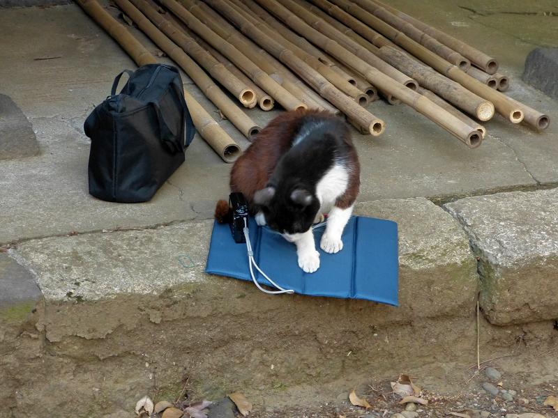シートで横になる黒白猫2