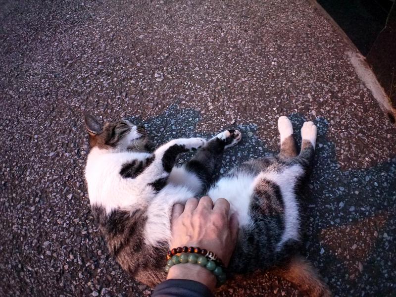 足元のキジ白猫2