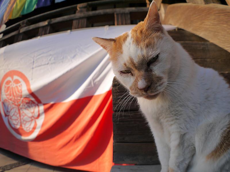 階段端の白茶猫2
