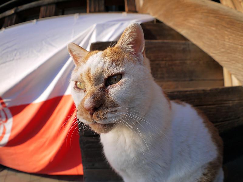 階段端の白茶猫3