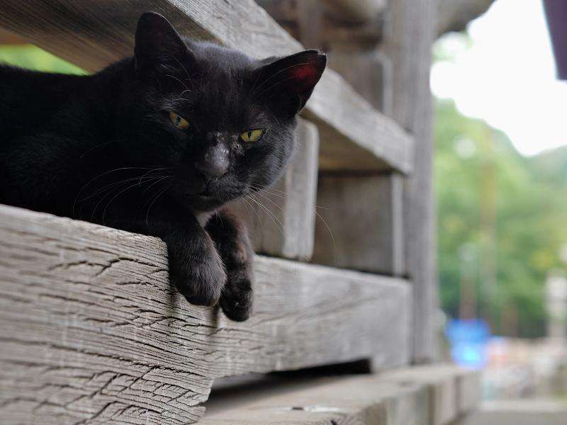 欄干の間から上半身を出す黒猫3