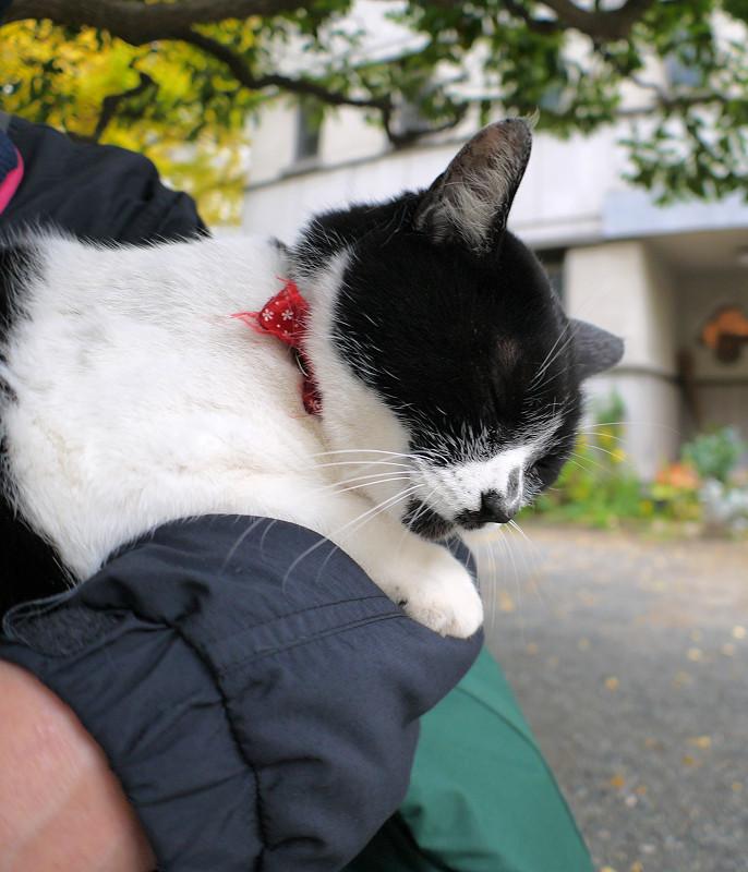 腕で寝ている白黒猫1
