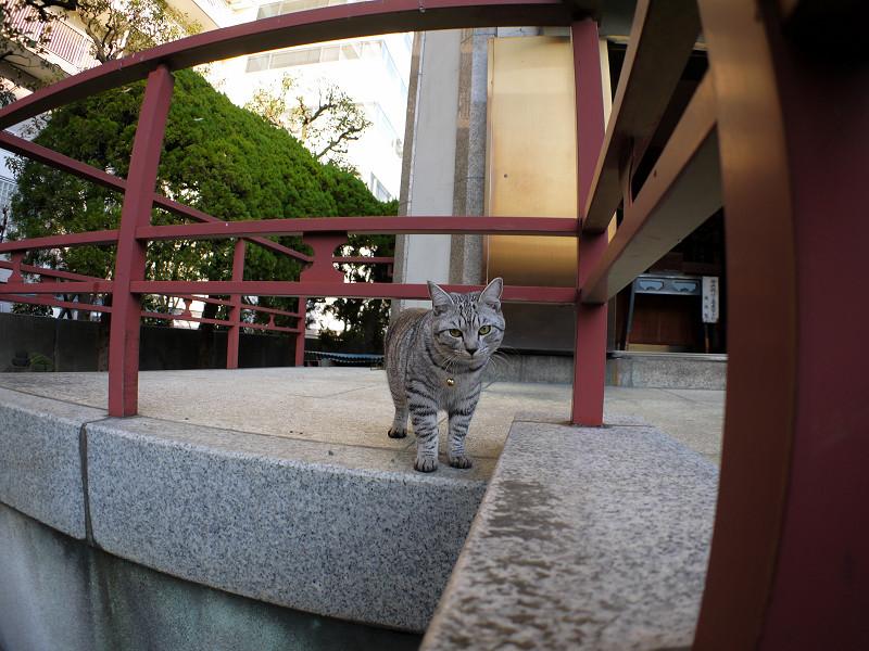 じっと気にしてるサバトラ猫1