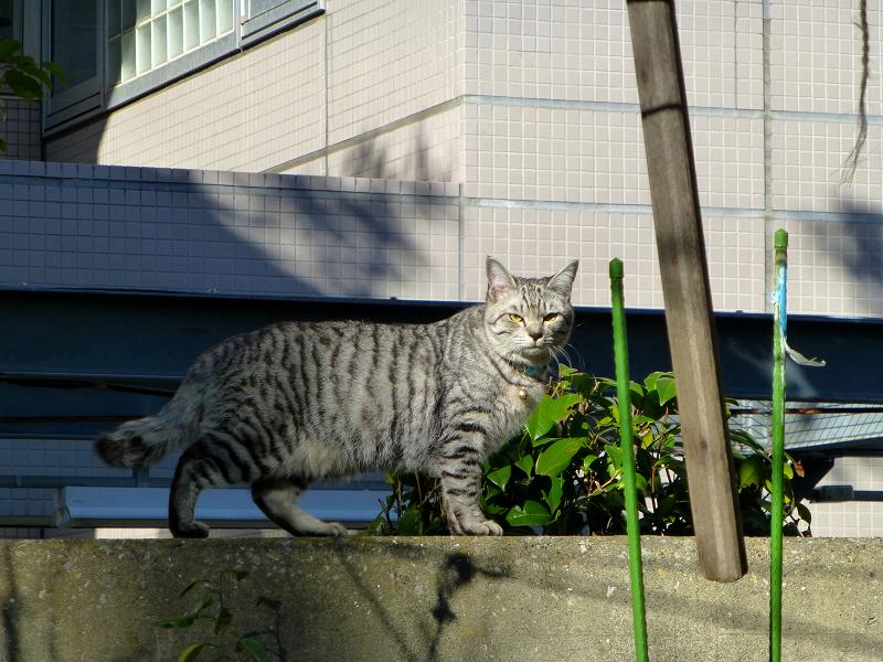 境内を動きまくるサバトラ猫1