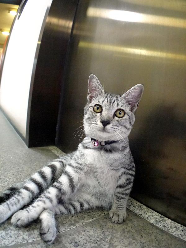 お堂内のサバトラ仔猫2