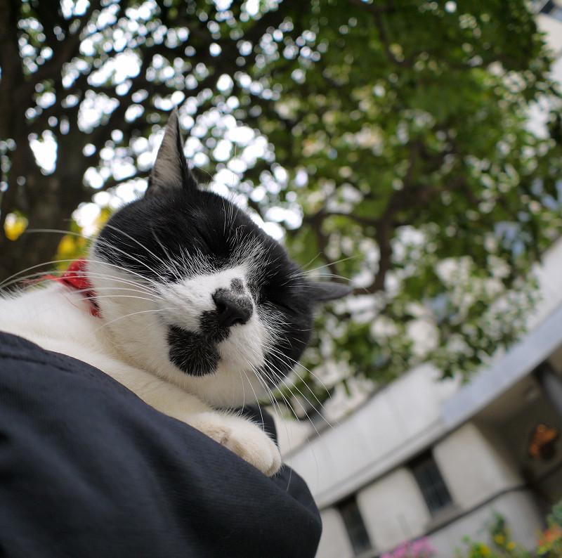 腕で寝ている白黒猫2