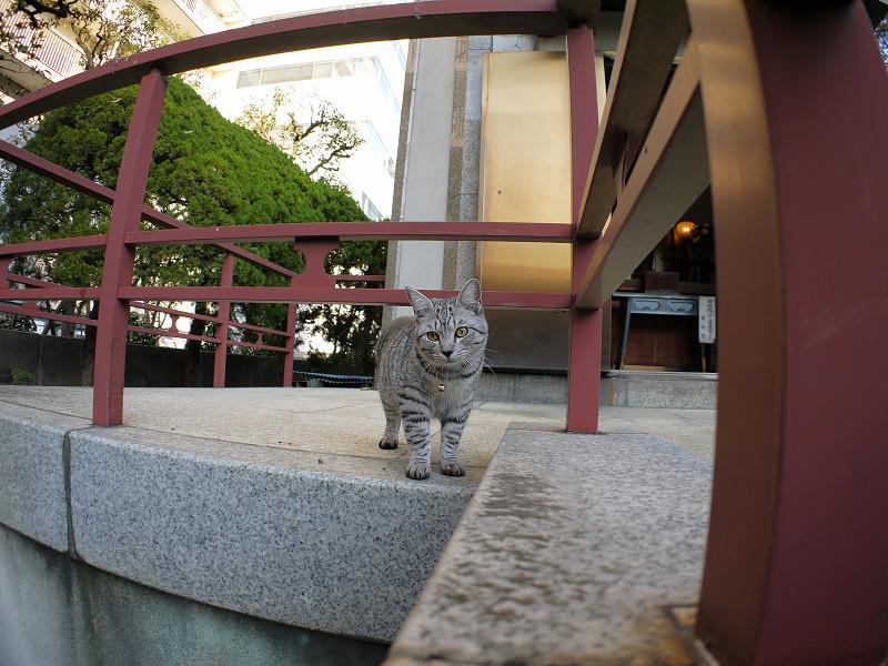 じっと気にしてるサバトラ猫2