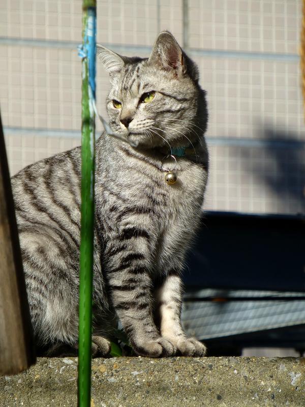 境内を動きまくるサバトラ猫2