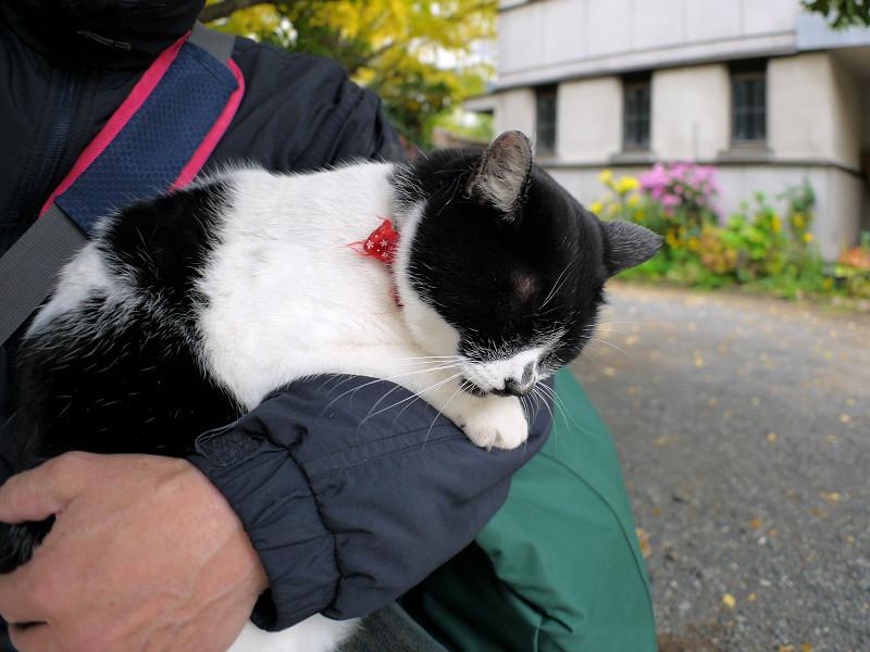 腕で寝ている白黒猫3