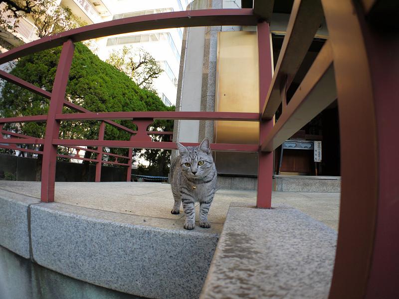 じっと気にしてるサバトラ猫3