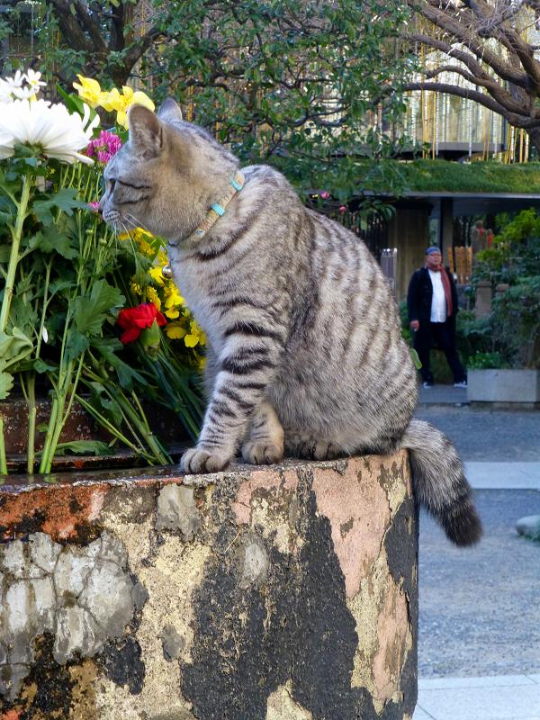 境内を動きまくるサバトラ猫3