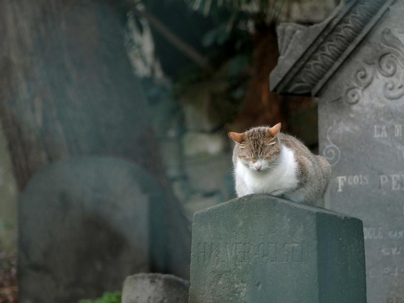 墓標とキジ白猫1