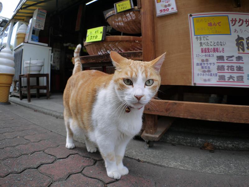 お店から出てきた茶白猫2