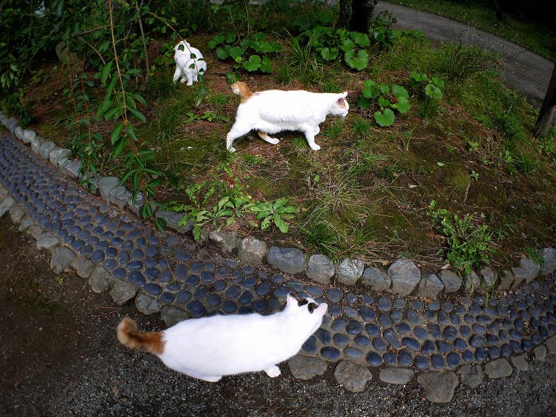 白茶系の猫たち